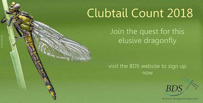 Clubtail Count 2018